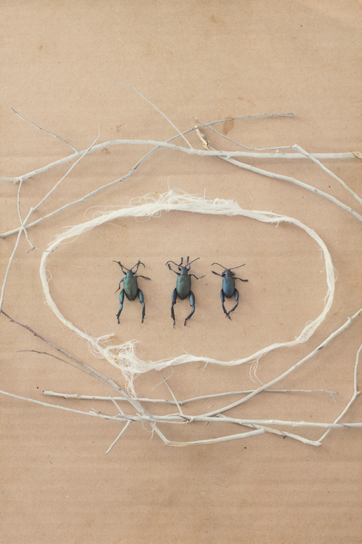 P.s. Insect Series by Caryn Drexl